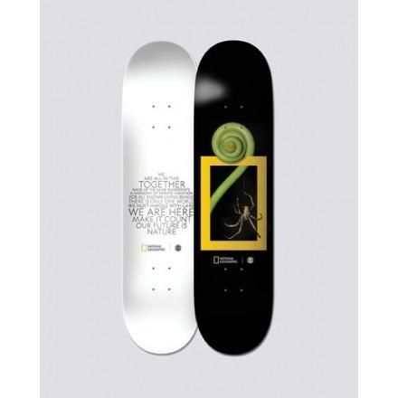 Skateboard elment deck nat geo spider 8'0